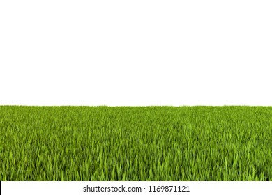 Beautiful green dense lawn. Grassy field. Flat lawn. Football field. Front view. Isolated on a white background. 3d rendering illustration.