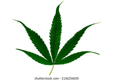 Beautiful green marijuana leaf isolated on white background