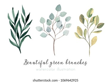 Beautiful hand drawn branches. Watercolor illustration