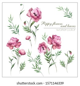 beautiful hand drawn watercolor illustration with poppy flowers and leaves. set of isolated flowers on white background