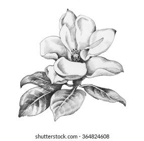 Beautiful hand-drawn monochrome wildflower illustration.
