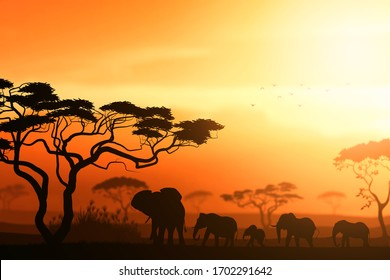 Beautiful heard of elephants safari sunset scene