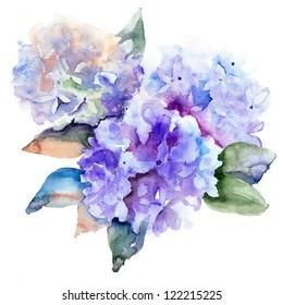 Beautiful Hydrangea blue flowers, watercolor illustration