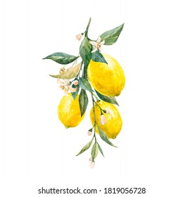 Beautiful image with watercolor yellow lemon fruits, leaves and flowers. Stock illustrations,.