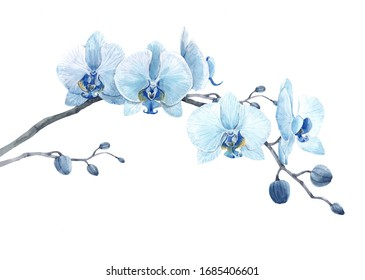 Beautiful isolated watercolor illustration, blue orchid