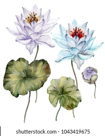Beautiful light blue and purple lotus flowers. Floral set (flower on stem, bud and leaves). Isolated on white background.  Watercolor painting. Hand drawn illustration.