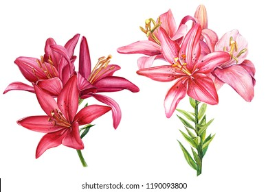beautiful lilies, two elegant bouquets of red flowers on an isolated white background, watercolor illustration