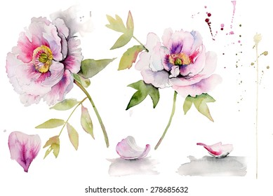 Beautiful peonies on white background. Red Peony flower botanical watercolor set.