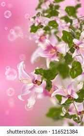 Beautiful pink exotic flowers.Flora design