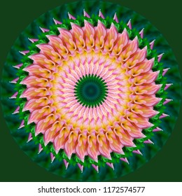 Beautiful pink, green, lavender, yellow, orange mandala with intricate spiral floral design on green background. Decorative element, ethnic design, web design, anti-stress therapy, meditation