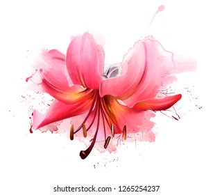 Beautiful pink Lily flower in spring nature outdoors on white background, macro, soft focus. Magical colorful artistic image of the tenderness of nature, spring flower Wallpaper.