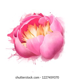 Beautiful pink peony flower with spray paint. Idyllic artistic image of hot summer, copy space