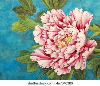beautiful pink peony on a blue background