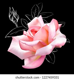 Beautiful pink rose on a black background with elements of white sketch. Amazing unusual artistic image of the beauty of nature with a breathtaking smell