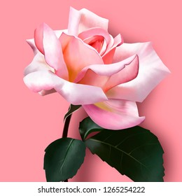 Beautiful pink rose on bright pink background. Amazing unusual artistic image of the beauty of nature