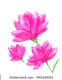 Beautiful pink watercolor flowers on white
