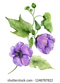 Beautiful purple abutilon flowers on a stem with green leaves isolated on white background. Watercolor painting. Hand drawn botanical illustration.