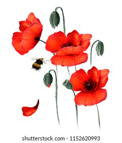 Beautiful red poppies and flying bumblebee. Hand drawn watercolor