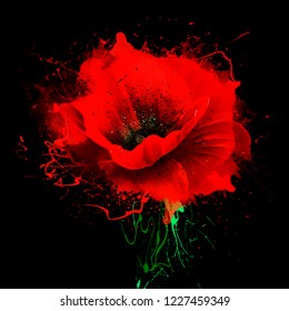 Beautiful red poppy with splashes of paint on black background. Idyllic artistic image of hot summer, copy space