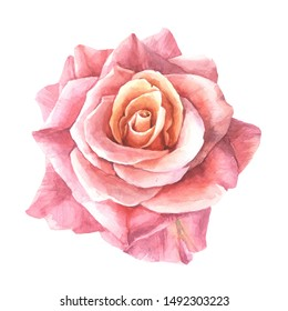 beautiful red rose on white background.watercolor