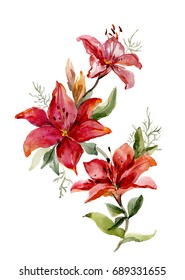 Beautiful red tiger lilies on white background.  Watercolor painting. Hand drawn. Vertical orientation.