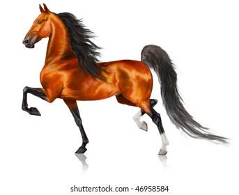 Beautiful running American Saddlebred horse
