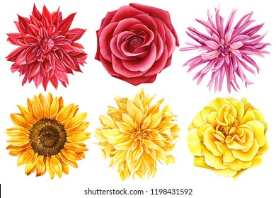 beautiful set of flowers, dahlia, roses, sunflower, watercolor illustration, hand drawing, on an isolated white background