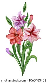 Beautiful spring floral illustration. Fresh amaryllis flowers with green leaves and closed buds isolated on white background. Watercolor painting. Hand painted image. Vertical orientation.