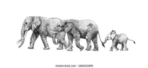 Beautiful stock pencil illustration with safari elephant family.