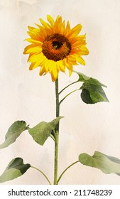 Beautiful sunflower. Artistic watercolor painting style with texture