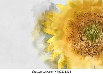 Beautiful sunflowers blooming in watercolor painting.