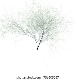 Beautiful tree on a white background. abstract tree forming .Computer Generated L-system Fractal Tree - Generative Art.Colorful