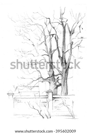 Beautiful Trees Winter Drawing By Hand Stock Illustration 395602009
