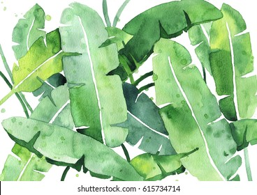 Beautiful tropical banana leaves watercolor painting. Ideal for interior decoration, prints and other things.