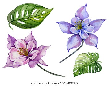 Beautiful tropical floral set (purple and blue aquilegia, large tropical leaves). Colorful columbine flower and green leaves isolated on white background. Watercolor painting. Hand drawn illustration