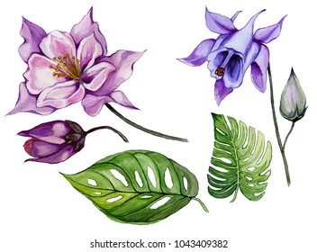 Beautiful tropical floral set (purple and blue aquilegia, bud and leaves). Colorful columbine flower and green leaves isolated on white background. Watercolor painting. Hand drawn illustration.