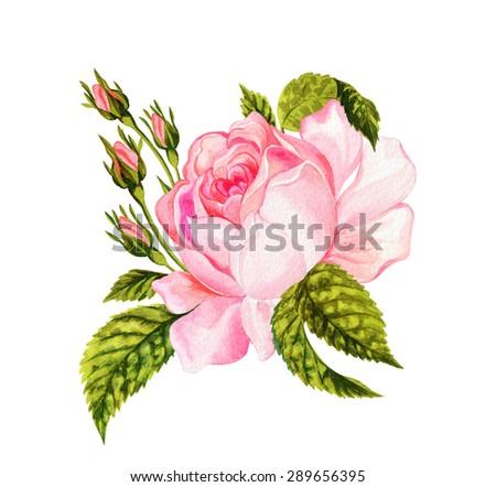 Royalty Free Stock Illustration Of Beautiful Vintage Rose Botanical