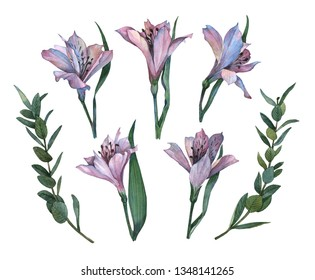 Beautiful watercolor alstroemeria flowers illustration. Botanical set of alstroemeria flowers and leaves. Floral Design elements. Perfect for invitations, greeting cards, prints, posters, packing etc