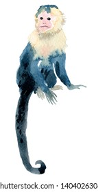 Beautiful watercolor capuchin monkey. Hand drawn illustration. Jungle exotic tropical animal.