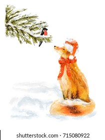Beautiful watercolor illustration of bullfinch sitting on the branch of spruce and the fox in the hat and scarf in the snow . Could be used for postcards/prints/ books/ t-shirts etc
