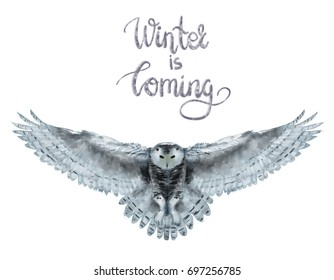 Beautiful watercolor illustration of flying snowy owl with lettering winter is coming isolated on white background. Could be used for postcards/ prints/ t-shirts etc