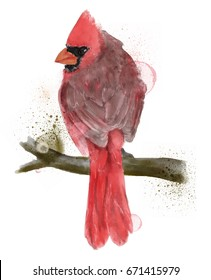 Beautiful watercolor illustration of red cardinal bird isolated on white background