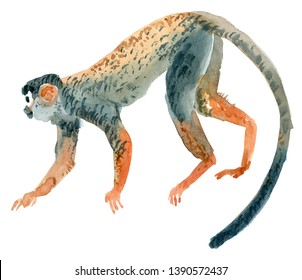 Beautiful watercolor monkey. Hand drawn illustration. Jungle exotic tropical animal.