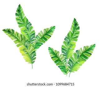 Beautiful watercolor palm leaves, isolated on white. Flowing shapes, trendy palms.