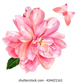 A beautiful watercolor pink rose, hand painted in vintage botanical art style on white background, with a green leaf and a butterfly