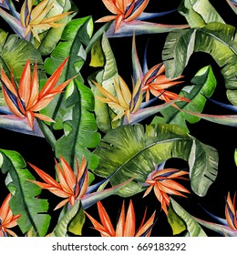 Beautiful watercolor seamless tropical jungle floral pattern background with palm leaves and flowers of strelitzia. Illustration