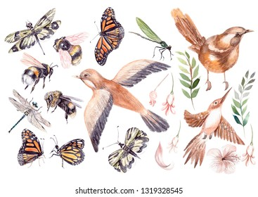 Beautiful watercolor set with birds, buterfly, bee and dragonfly.  Illustration
