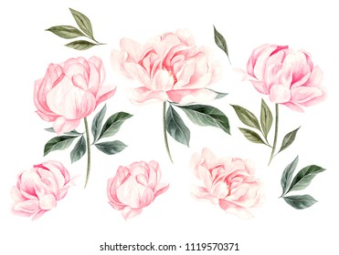 Beautiful Watercolor set with peony flowers. Illustration