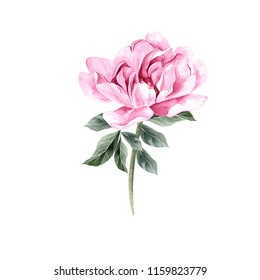 Beautiful Watercolor set with peony. Illustration