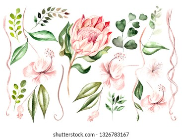 Beautiful watercolor set with protea  flowers and hibiscus. Tropical plants and leaves.  Illustration